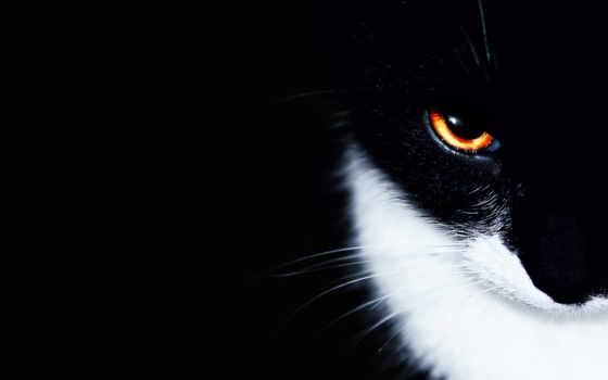 кот, black, минимализм, кошки,