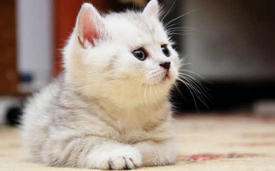 тюлень, котенок, яndex, cute, интересно, коллекция, user, взгляд
