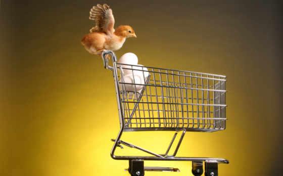 animals, цыпленок