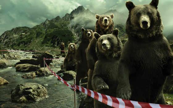 прикольные, юмор, медведи