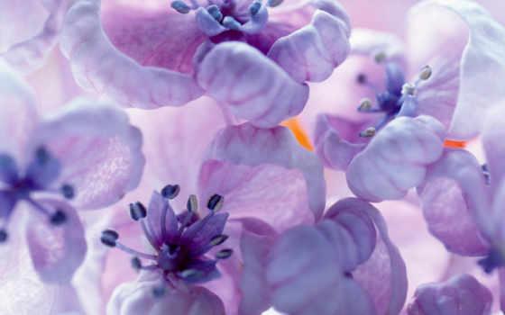 цветы, personal, дневник