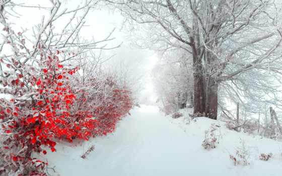снег, red, листья, winter, каталог, пасть, деревьями, природа,