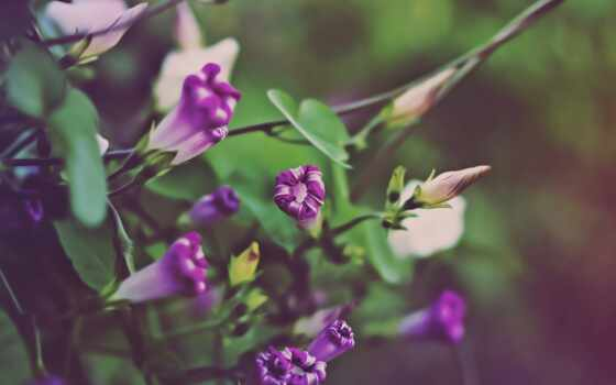цветы, осень, зеленые