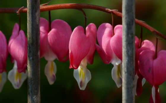 ветка, цветущая, risunok, птичка,