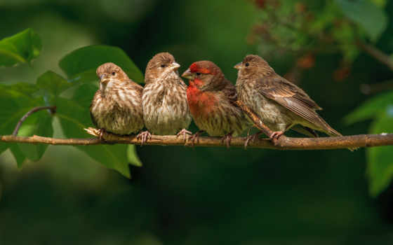 птицы, branch, природа, природы, звуки, воробьи, птиц,