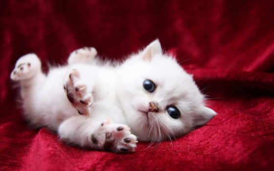 потягивается, кот, white