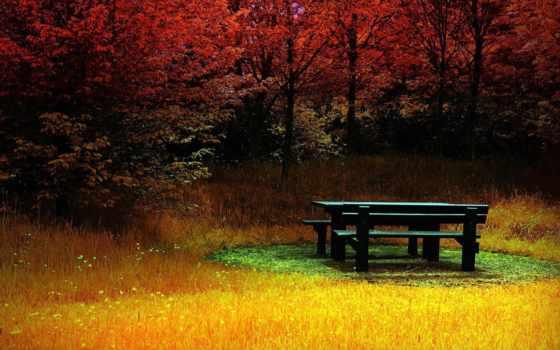 красивые, качественные, лесу, природа, широкоформатные, река, high, wide, бесплатные, desktop,