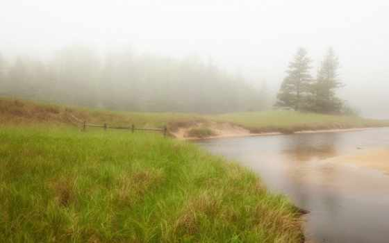 тумане, утреннем, природа, trees, разных, разрешениях,