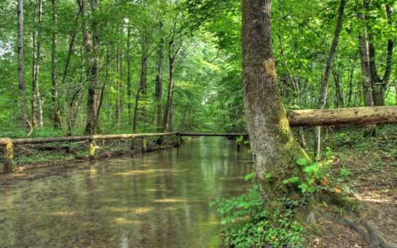 ручей, лес, лесу, природа, весеннем, река, весной, красивый,