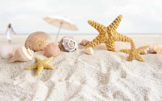 песок, пляж, ракушки, star, море, морская, раковины,