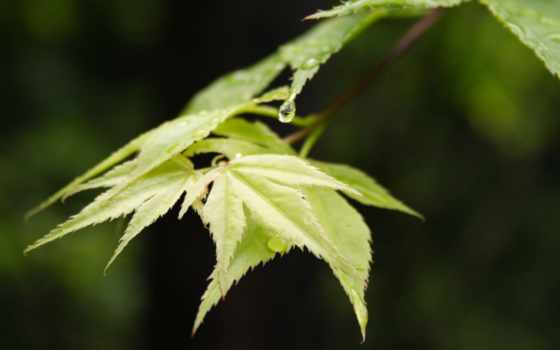 лист, листва, зелёный, природа, permission, high, фотообои
