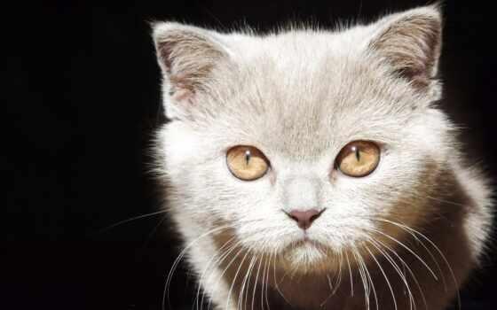 mobile, взгляд, котенок, black, смотреть, глаз, глаза, cute, внимательный, мяу