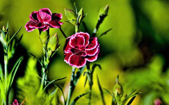 flowers, wallpaper Фон № 2231 разрешение 1920x1080
