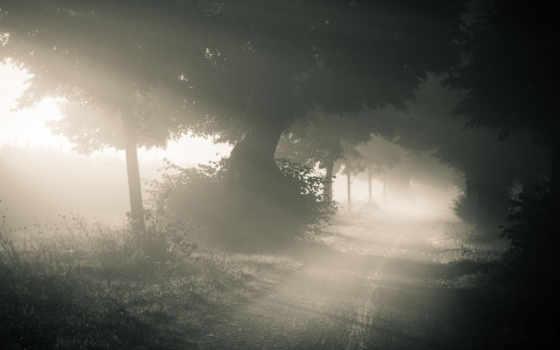 туман, лес, утро, дорога, природа, лесу,