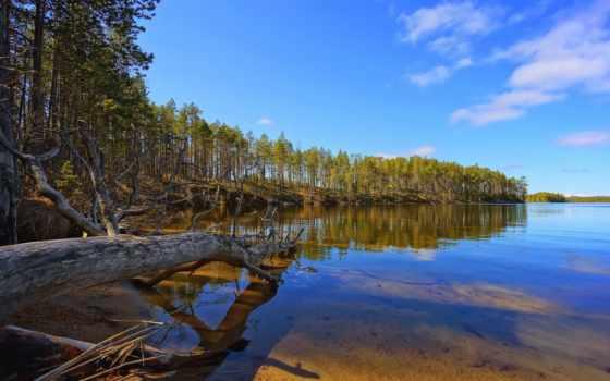озеро, дерево, purple, desktop, scenery, landscape,
