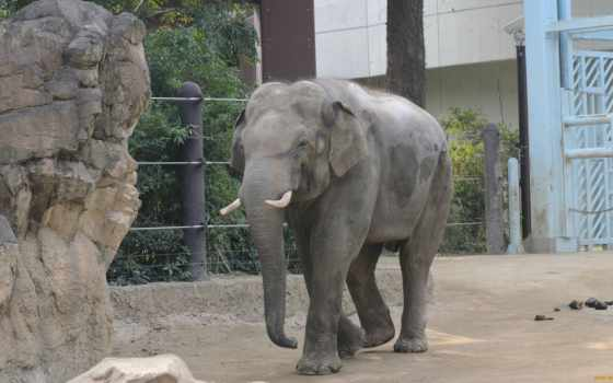 слоны, zhivotnye, картинку