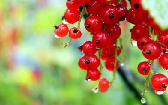 ягода, ногтей, design, своими, руками, смородина, рай, практикум, выращиванию, лаком,