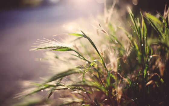 jual, трава