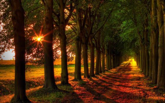 дорога, trees, осень, деревьев, along, лес, поле