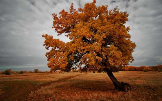 осень, природа, дерево