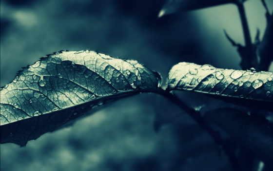капли, листья, дек