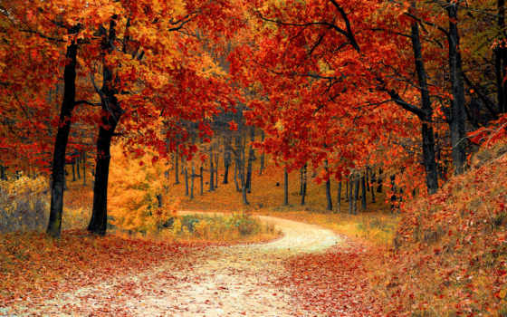 пасть, season, осень, colours, банка, seasons, cookies,