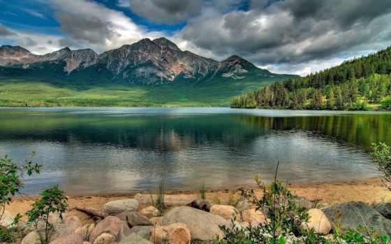 images, лес, paisajes, природа, desktop, pine,