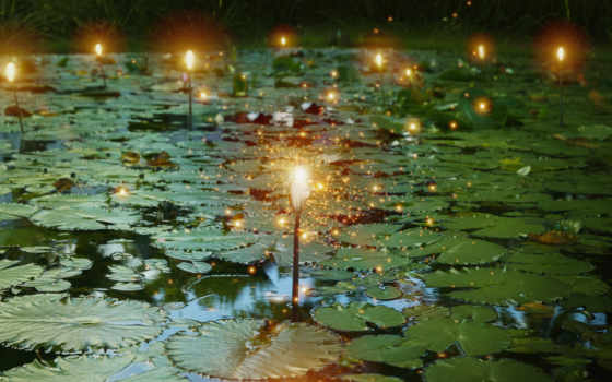 lily, stock, pads, свет, лампочка, пруд, glowing, огни, photos, images,