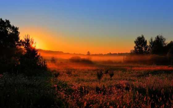 туман, рассвет, sun, утро, лес, поле, раннее, природа, поляна, trees,