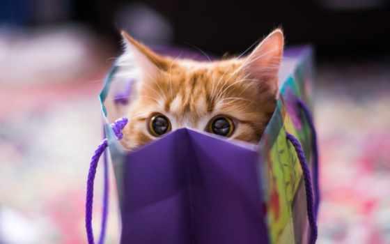кот, red, котенок, действия, эти, sweetheart, выполняя, дар,