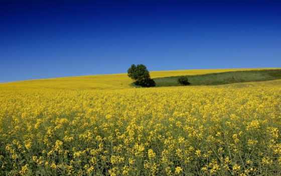 ди, norcia, castelluccio, nexus, пейзажи -, растение, monti, sibillini,