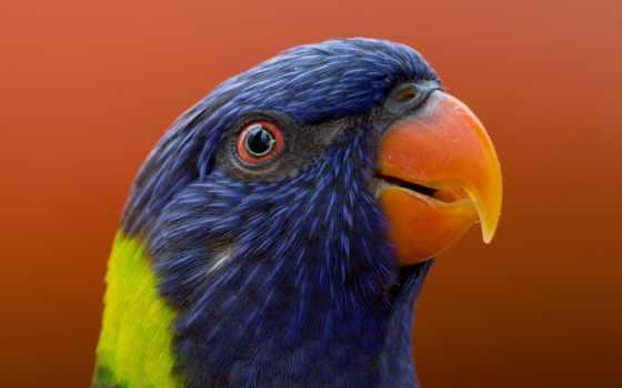 попугай, stock, photos, images, canva,