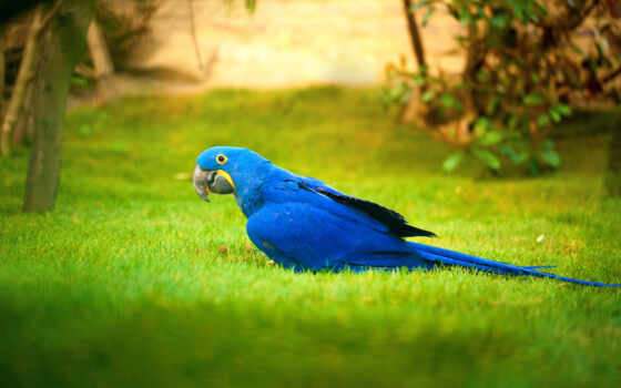 попугай, коллекция, птица, нота, трава, природа