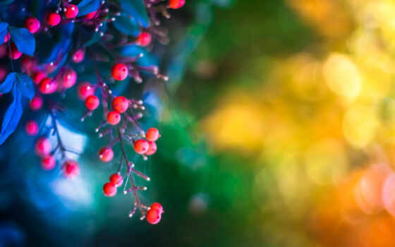 ягоды, листья
