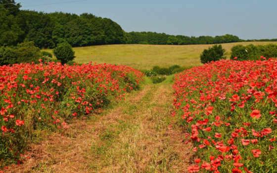 поле, природа, you