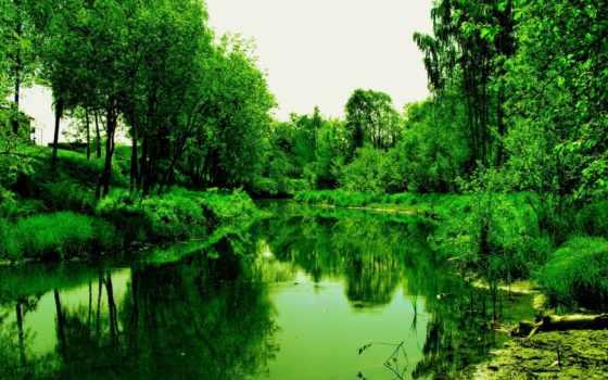 лес, деревя, reservoir