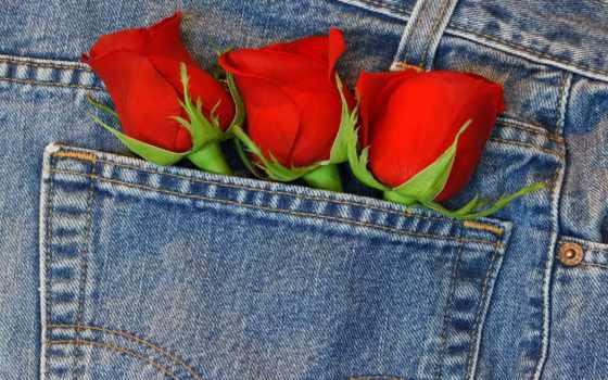 розы, минимализм, widescreen, mix, джинсы, blue, рейтинг, lana, мужчина, дата, дек,