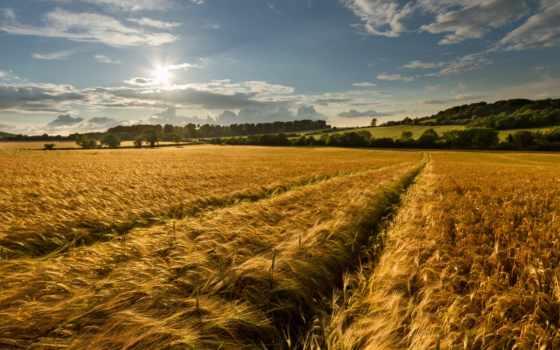 поле, summer, небо, колоски, природа, золотое, цветы, маки, poppy,