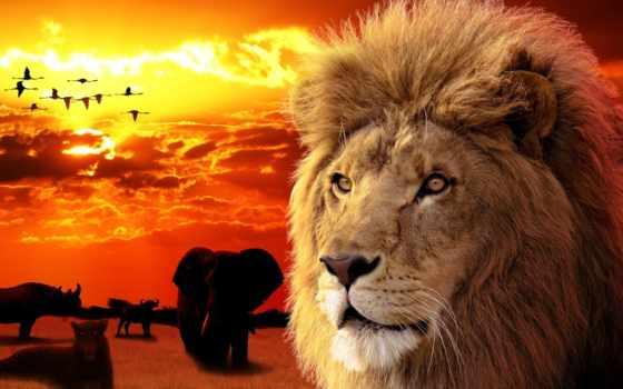 animal, león, fondos, pantalla, animales, aliexpress, ткань, escritorio, african,