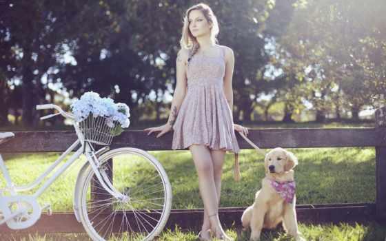 собака, obedience, тренировочный, dogs, pet, sydney,