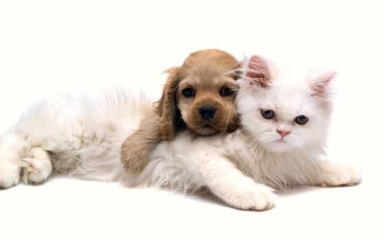 животные, животных, домашние, животными, кошек, товары, домашними,
