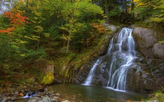 деревя, природа, лес Фон № 83877 разрешение 1920x1080