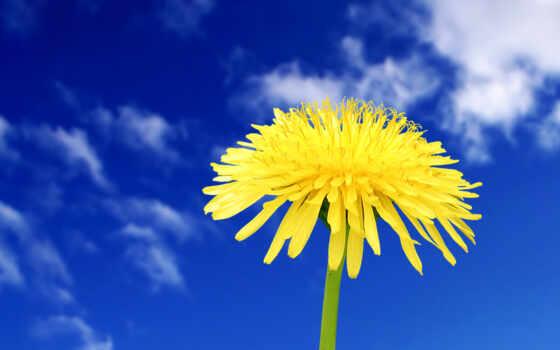 цветы, красивых, подборка
