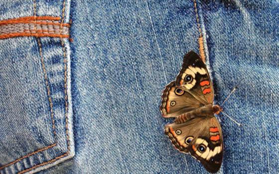 джинсы, бабочка, бабочки