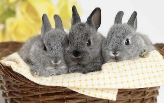 совершенно, два, кролики, пушистики, корзинке, zhivotnye,