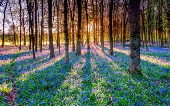 trees, rays, природа, sveta, трава, леса, landscape, кб,