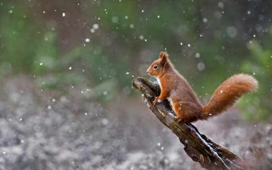 снег, bing, winter