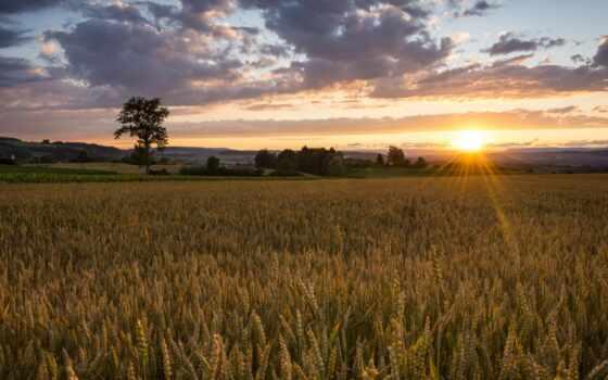 восход, поле