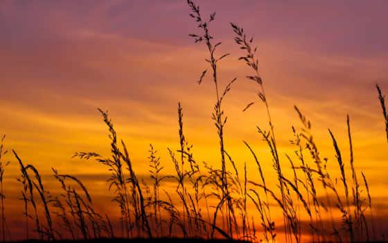 закат, поле, небо Фон № 57104 разрешение 1920x1080