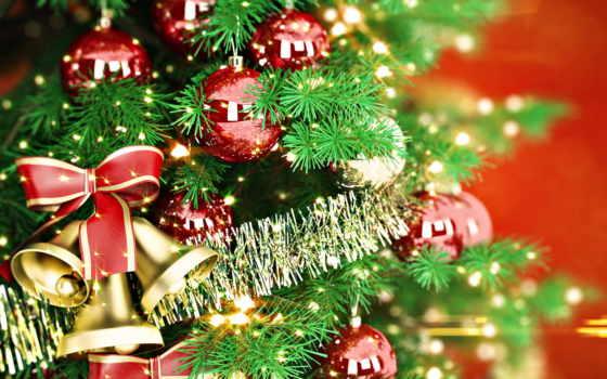 елки, новогодние, масть